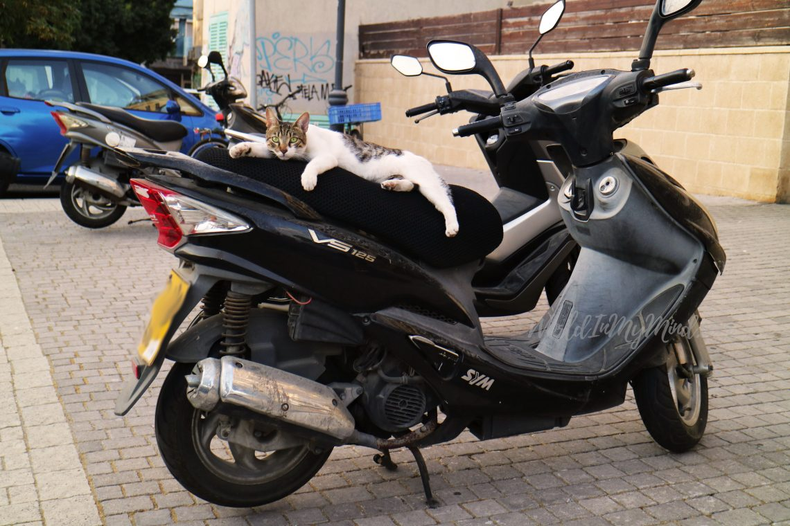 Urban photography; cat on a motorcycle in Tel Aviv