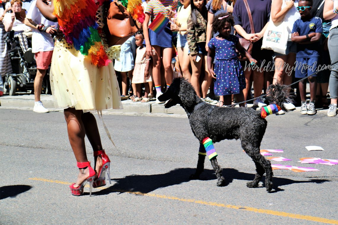 Pride parade: a dog