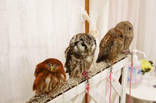 Owl café in Tokyo