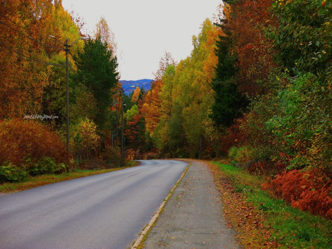 Norwegian Autumn